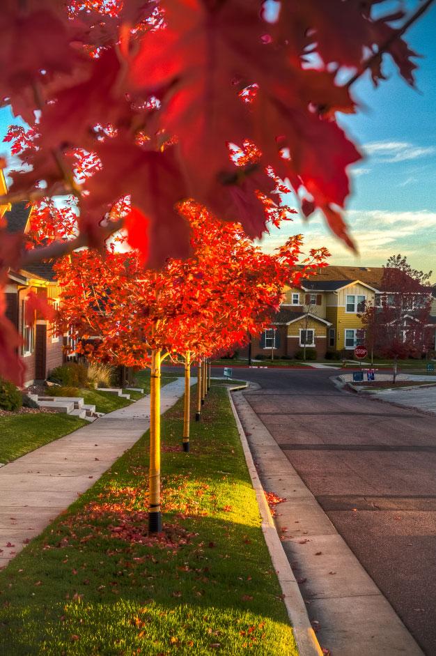 %Gold Hill Mesa %Colorado Springs Real Estate